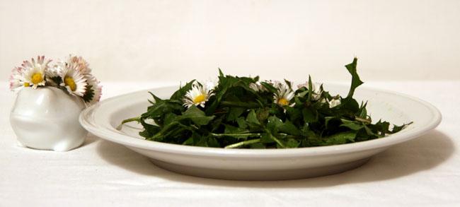insalata di tarassaco e margherite