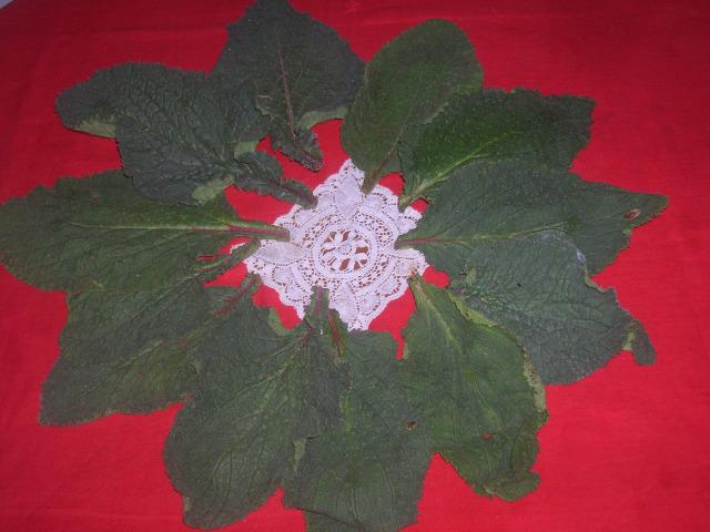 foglie di borragine 2 p