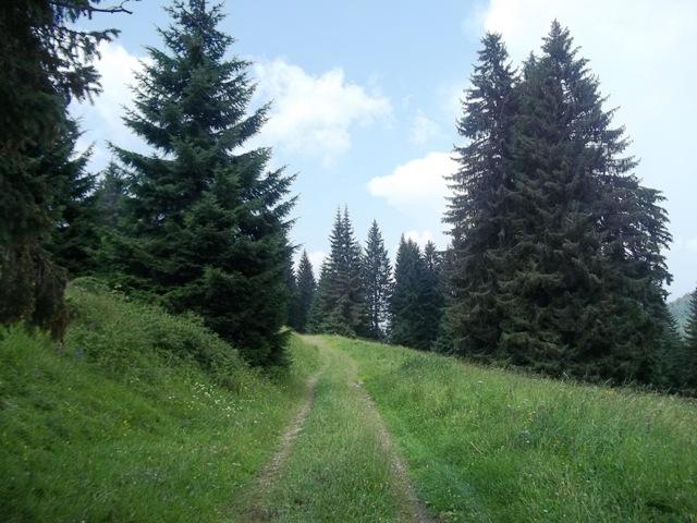 sentiero.3
